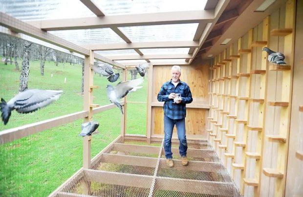 Adapostul porumbeilor – intretinere si recomandari